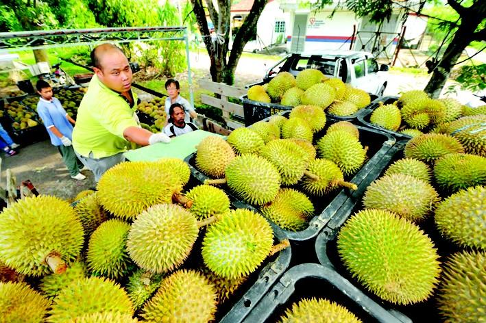 马来西亚榴莲飘香