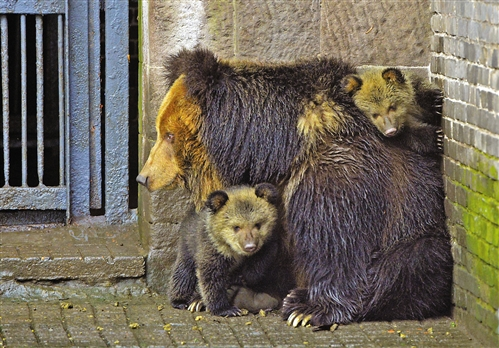 棕熊宝宝图片_