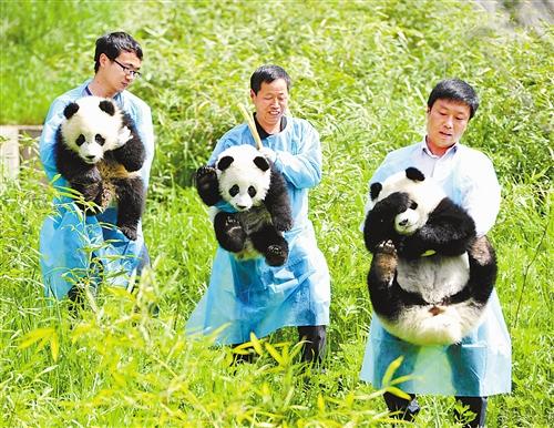 陕西省珍稀野生动物抢救饲养研究中心2013年