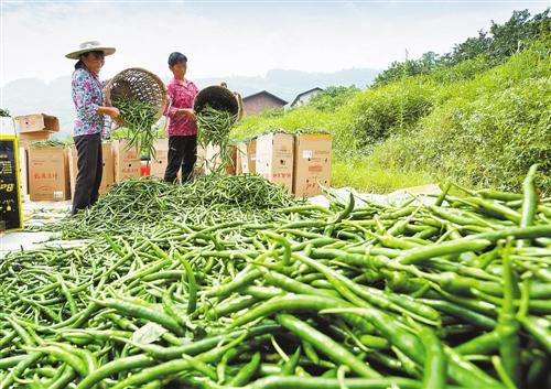 不断优化农业产业结构
