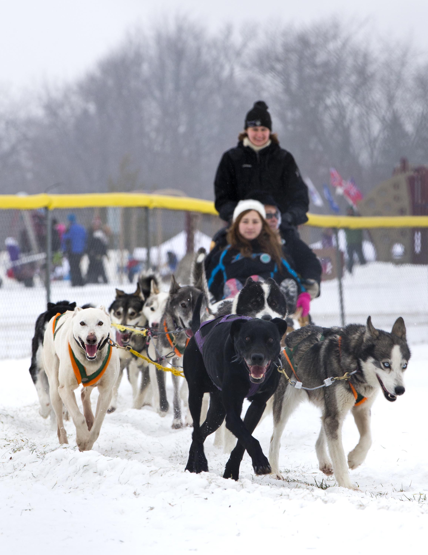 新华社照片,坎宁顿,2015年1月25日   (锐视角)(2)加拿大的冬季体验狗拉雪橇   1月24日,在加拿大安大略省布鲁克镇坎宁顿社区,游客乘坐狗拉雪橇,体验雪地滑行。   当日,加拿大安大略省布鲁克镇坎宁顿社区举办2015年狗拉雪橇赛暨冬季节活动,吸引众多游客前来体验这项受欢迎的冬季活动。   新华社发(邹峥摄)