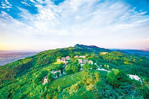 茶山竹海国家森林公园 摄/王朝达