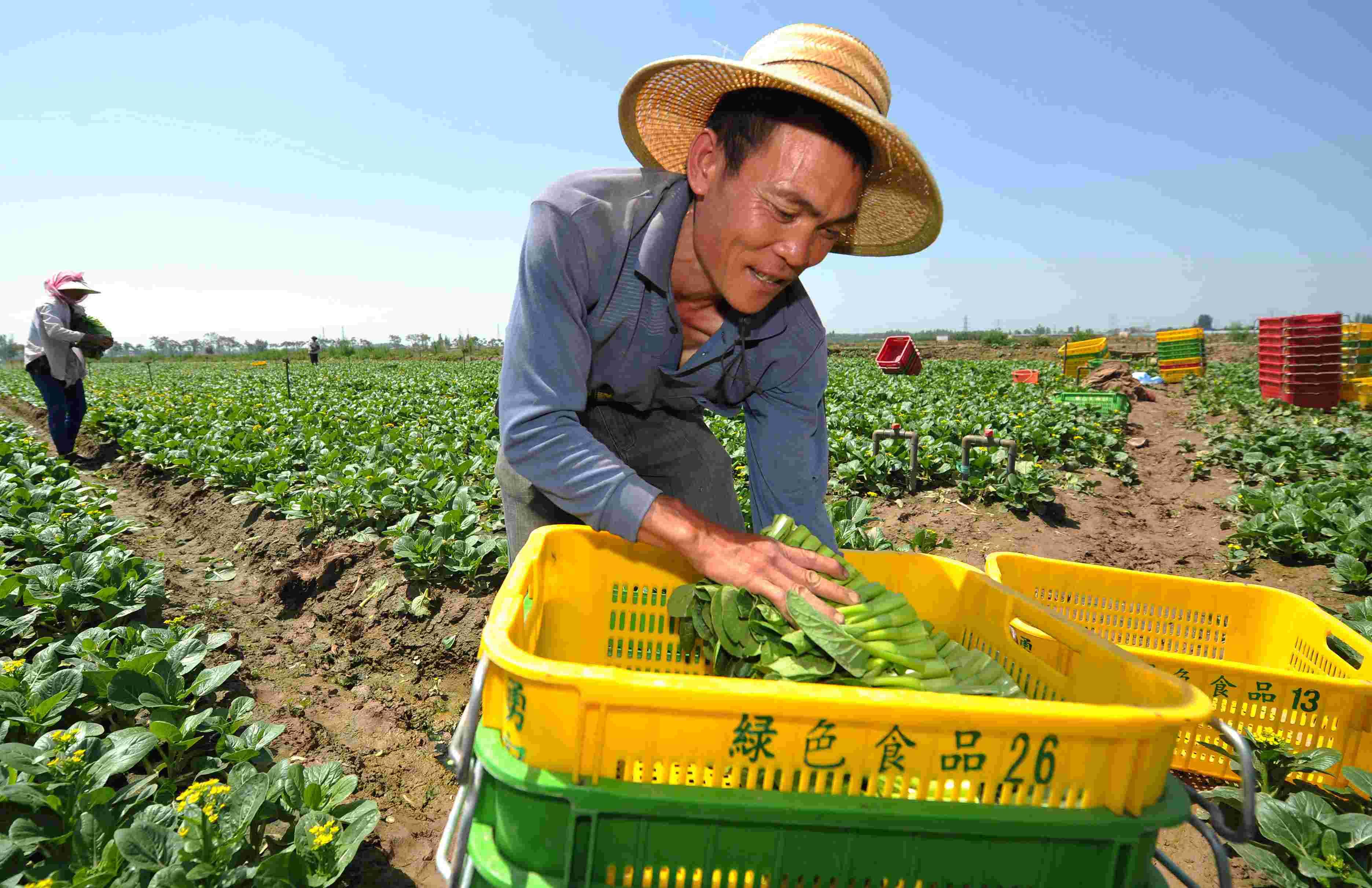 寿光蔬菜优质高产的秘诀是什么?