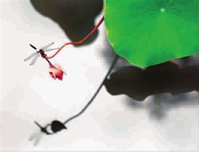 蜻蜓气球图解 步骤