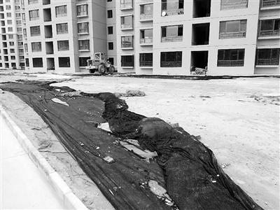 小区垃圾堆积地面坑洼影响居民生活